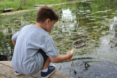 boy catching bugs with net in pond