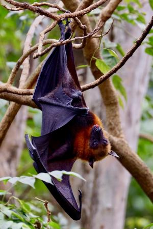 bat hanging from tree