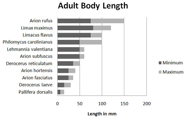 adult_body_length_chart.jpg