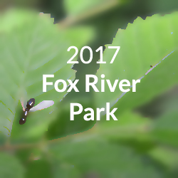 fox river park button