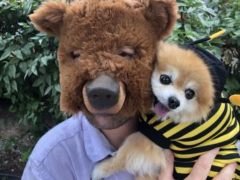 bear holding dog dressed as bee