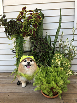 dog sitting with plants