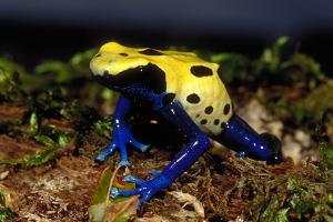 frogs milwaukee public museum
