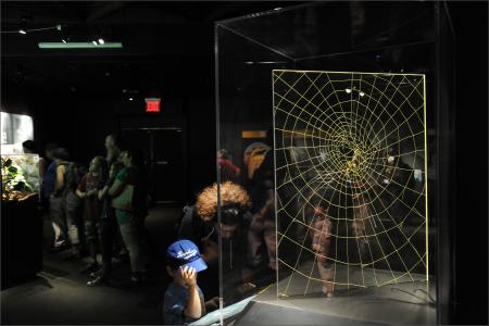 visitors looking at spider web exhibit