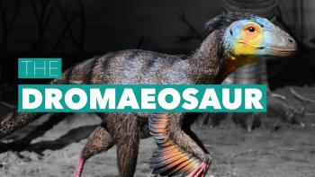 the Dromaeosaur
